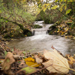 Natural becks and streams in the farm land