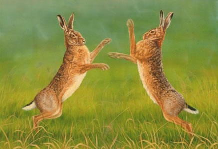 fuller-boxing-hares