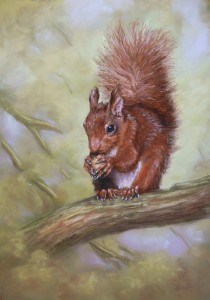 cath-inglis-redsquirel